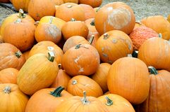 Thanksgiving Pumpkins. A Thanksgiving setting of a pile of pumpkins in the horizontal view Royalty Free Stock Photos