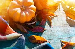 Thanksgiving With Pumpkins, autumn leaves And warm blanket stock images