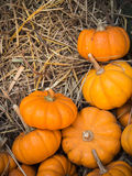 Thanksgiving pumpkins background Stock Photo
