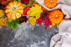 Thanksgiving pumpkins with fall leaves Royalty Free Stock Photos