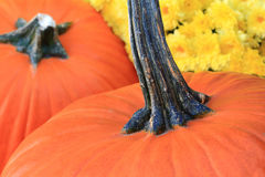 Thanksgiving Pumpkins and Flowers Stock Photos