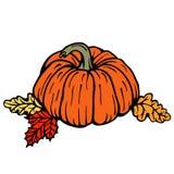 Thanksgiving pumpkins Stock Photos