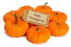 Thanksgiving pumpkins Royalty Free Stock Image