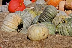 Thanksgiving Pumpkins on hay stock images