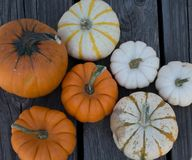 Thanksgiving. Pumpkins patch perfectly fit at the Thanksgiving Celebration royalty free stock image