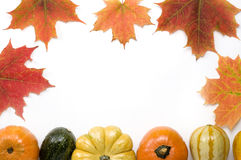 Thanksgiving Pumpkins and Squash Stock Images