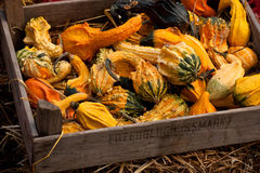 Thanksgiving pumpkins on straw at daylight Stock Photo