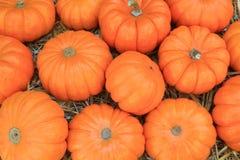 Thanksgiving Pumpkins symbols Royalty Free Stock Photography