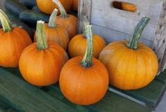 thanksgiving pumpkins on a table at the market for the halloween Royalty Free Stock Images