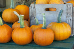 thanksgiving pumpkins on a table at the market for the halloween Royalty Free Stock Photos