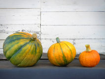 Thanksgiving pumpkins. Three thanksgiving pumpkins on white old background Stock Photos