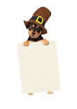 Thanksgiving Puppy Dog Holding Blank Sign Stock Photo
