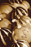 Thanksgiving retro image with pumpkins Royalty Free Stock Photo