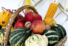 Thanksgiving Season II Royalty Free Stock Photo