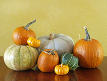 Thanksgiving squash pumpkins Royalty Free Stock Photos