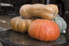 Thanksgiving squash pumpkins Royalty Free Stock Image