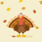 Thanksgiving Turkey Bird Cartoon Mascot Character Stock Photography