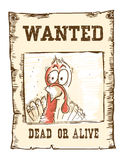 Thanksgiving turkey bird.Wanted funny illustration on old paper Royalty Free Stock Images