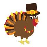 Thanksgiving Turkey Stock Images