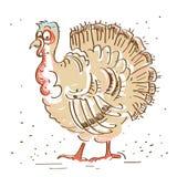 Thanksgiving turkey isolated on white Stock Photo