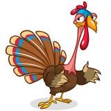 Thanksgiving turkey mascot waving on white background Royalty Free Stock Image
