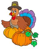 Thanksgiving turkey with pumpkins Royalty Free Stock Photos