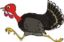 Thanksgiving turkey, runaway Royalty Free Stock Image
