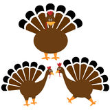 Thanksgiving Turkey set Stock Image