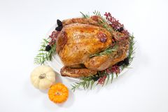 Thanksgiving Turkey on White Royalty Free Stock Photo