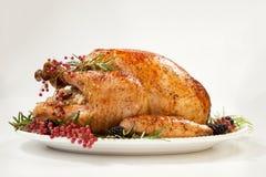 Thanksgiving Turkey on White stock photography