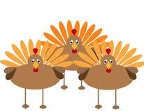 Thanksgiving Turkeys Stock Images