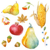 Thanksgiving watercolor clipart Royalty Free Stock Image