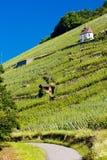 Thann. Grand cru vineyard and Chapel of St. Urban, Thann, Alsace, France Royalty Free Stock Photo