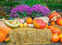 Thansgiving produce display Royalty Free Stock Photos