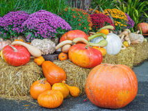 Thansgiving produce display Royalty Free Stock Photo