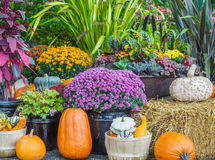 Thansgiving produce display Royalty Free Stock Photography