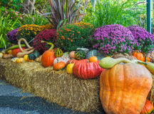 Thansgiving produce display Stock Photography