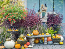 Thansgiving produce display Royalty Free Stock Photography