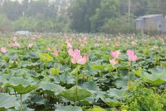 Thap del loto de Vietnam del fondo fotografía de archivo libre de regalías