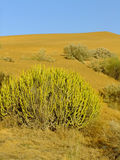 Thar öken nära Jaisalmer, Rajasthan, Indien Royaltyfri Foto
