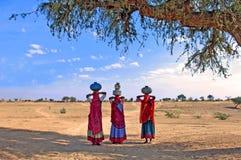 沙漠印度thar 库存图片