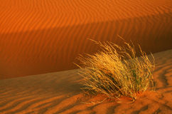 Thar Desert Royalty Free Stock Photography