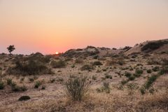 Thar Desert Royalty Free Stock Images