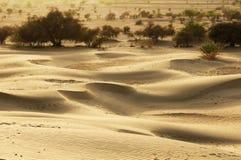 Thar desert in India Stock Images