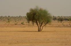 Thar desert in India Stock Image