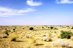 Thar Desert Landscape Stock Photos