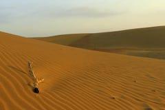 Thar desert. Sunrise in the Thar desert after night we spend in the desert Royalty Free Stock Images