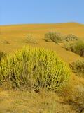 Thar-Wüste nahe Jaisalmer, Rajasthan, Indien lizenzfreies stockfoto