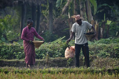 Tharu man and woman strewing seeds in fields Stock Images
