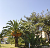 Thassos, August 21st: Palms in Limenas town from Thassos island in Greece Stock Photos